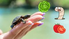 Food for baby turtle Baby Turtle Food What to do if turtle isn't eating Turtle Care, Pet Turtle, Baby Turtles, Be My Baby, Barbie Accessories, Pets, Animals, Food, Animales