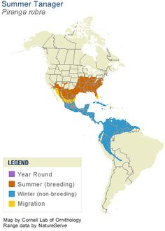 Summer Tanager Range Map