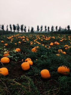 Image shared by Marta■. Find images and videos about nature, autumn and fall on We Heart It - the app to get lost in what you love. Autumn Day, Hello Autumn, Autumn Leaves, Photo Backgrounds, Deco Porte Halloween, Image Tumblr, Over The Garden Wall, Autumn Aesthetic, Aesthetic Dark