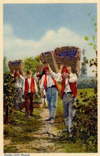 (PORTUGAL) - Pinhão (Alto Douro) - Jornaleiros transportando as uvas vindimadas * Bringing in the grapes