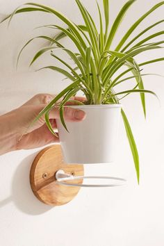 Single Herb Wall Planter - Urban Outfitters