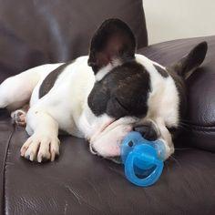 French Bulldog Puppy with a 'Binkie'❤️