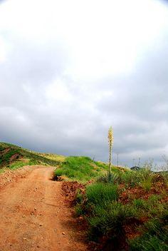 Chaparral Yucca 4/19/2011 #4 by EmperorNorton47, via Flickr