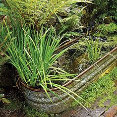 Recycled garden retreat ... This is where it gets tricky with water plants in trough.