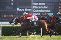 Lucky And Wealthy (AUS) 2008 Ch.g. (Strada (AUS)-Star Above (AUS) by Zabeel (NZ) 1st Macau Sprint Trophy (MAC-G3,1200mT,Taipa) (photo: Macau Jockey Club)