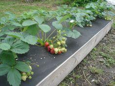Permaculture, Pergola Patio, Backyard, Garden Beds, Home And Garden, Apple Flowers, Vegetable Garden Design, Greenhouse Gardening, Growing Vegetables