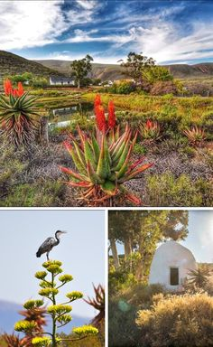 The tranquility of the scenic Klein Karoo captured. #KleinKaroo #SA #tranquil #landscape #birds