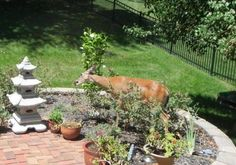 Rude behavior: What was once a nice garden is now overrun with hooligans.