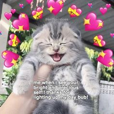 tag someone who lights up ya life this cat is cute im soft! im not gonna be able to travel this summer but i rlly want to :( if youre travelling where are yall going? remember the maintain your health and hydrate and never skip meals! your body is impor Cute Cat Memes, Cute Love Memes, Funny Memes, Wholesome Pictures, Heart Meme, Heart Emoji, Crush Memes, Lovey Dovey, Wholesome Memes
