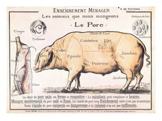 Cuts of Pork, illustration from a French Domestic Science Manual by H. de Puytorac, 19th century Gicleetryck