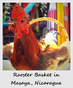 Polaroid of the week: Rooster basket in Masaya, Nicaragua