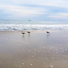 """@gypsy_world_'s photo: """"Another beautiful Malibu morning """""""
