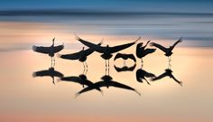 Photograph Dance of the Cranes by Asaf Amran on 500px
