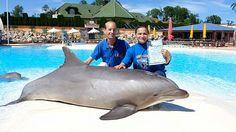 LIPPERSWIL - Nach dem Tod der beiden Delfine im Connyland haben deutsche Tierschützer eine neue Theorie zur Todesursache. Die Verabreichung eines chinesischen Medikaments soll Schuld sein.