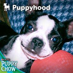 It's the best. #puppy #smile #happy