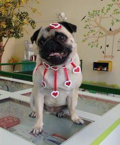 GARGANTILHA CORUJA | WoW PeT Pet Shop, Bandana, Pets, Make Bows, Dog Bows, Dog Clothing, Hair Bows, Accessories, Flowers