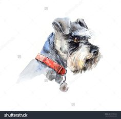 Find Schnauzer Portrait Dog Set Small Dogs stock images in HD and millions of other royalty-free stock photos, illustrations and vectors in the Shutterstock collection. Thousands of new, high-quality pictures added every day. White Miniature Schnauzer, Schnauzer Puppy, Dog Pin, Dog Paintings, Watercolor Animals, Dog Portraits, Small Dogs, Chip Tattoo, Hand Drawn