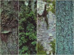 Tree bark by diann