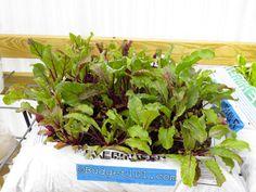 Weed Free Bag Garden