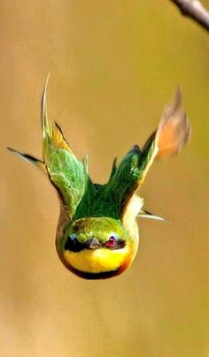 cool bird photography with bird caught mid flight! Kinds Of Birds, All Birds, Little Birds, Love Birds, Pretty Birds, Beautiful Birds, Animals Beautiful, Exotic Birds, Colorful Birds