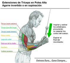 Tríceps en Polea Alta - Culturismo http://williambodybuilder.com/ http://fuerzamaximawilliam.wordpress.com/