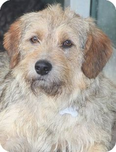 8/3/14 Newtown Square, PA - Terrier (Unknown Type, Medium) Mix. Meet Princeton, a dog for adoption. http://www.adoptapet.com/pet/11294715-newtown-square-pennsylvania-terrier-unknown-type-medium-mix