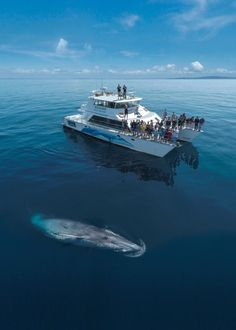 Whale and dolphin watching in Auckland