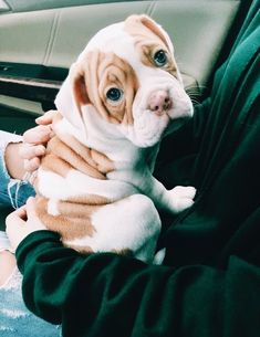 The major breeds of bulldogs are English bulldog, American bulldog, and French bulldog. The bulldog has a broad shoulder which matches with the head. Cute Dogs And Puppies, I Love Dogs, Doggies, Baby Puppies, Animals And Pets, Funny Animals, Cute Little Animals, Cute Creatures, Animals Beautiful