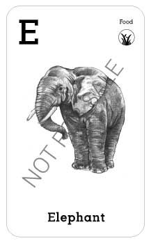 Animal Augmented Reality Alphabet Cards (A-Z) — Elsewhere Designs All Animals Photos, Animal Pictures, Elephant Eating, Flashcards For Kids, Alphabet Cards, Animal Cards, Augmented Reality, Stuffed Animals, Illustration