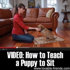 VIDEO: How to Teach a Puppy to Sit►►http://lovable-dogs.com/video-how-to-teach-a-puppy-to-sit/?i=p