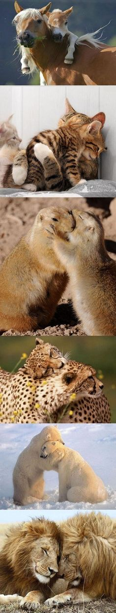 "Animal Hugs……..WHY IS IT THE ""HUMAN"" IS NOT THIS LOVING TO EACH OTHER (??)……….ccp"