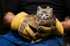 *sidenote* kittens always make fireman smile.
