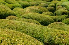 PP38020915-Close-up-Buxus-garden-Marqueyssac-France.jpg (4288×2848)