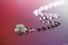 Fotografía A long way to see you por Miki Asai en 500px