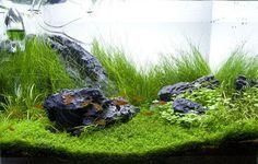 amerikanische Wasserpflanzen Aquarium Steine