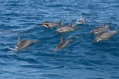 Swim with the #dolphins #Mauritius — About Mauritius   Mauritius Attractions
