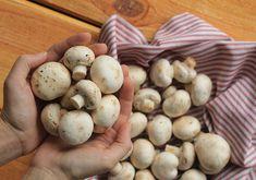 Passo a passo de como limpar, lavar, cozinhar e fazer champignon. Ao contrário do que muita gente pensa, cogumelo é super fácil de limpar e cozinhar.