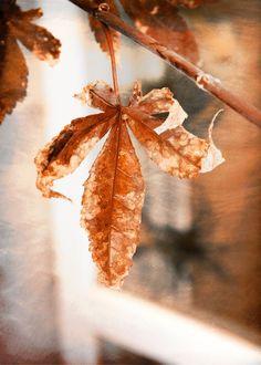 autumn leaf copper colored