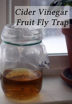 Cider Vinegar Fruit Fly Traps are a quick and easy way to rid your home or any enclosed area of the annoying little flies without toxic chemicals. Homemade Fruit Fly Trap, Diy Fruit Fly Trap, Fruit Fly Traps, Apple Coder Vinegar, Fruit Fly Killer, Catch Fruit Flies, Apple Cidar, Mosquito Trap, Fly Repellant