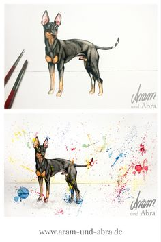 Zeichnung Illustration Aquarell English Toy Terrier | Aram und Abra