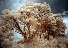Community: 40 Astounding Examples Of Infrared Photography