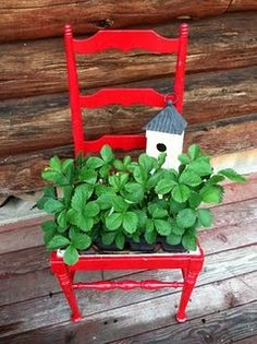 Chair planter -- used chicken wire and made a base for strawberries.