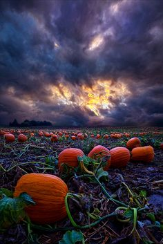 Halloween is Near by Phil Koch on 500px