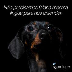 A gente se entende pelo olhar. Pelo jeito de andar. Pela maneira de respirar. Nossa língua é o amor. We don't have to speak the same language to understand each other. Our common language will always be love. #cachorro #dog #amor #love