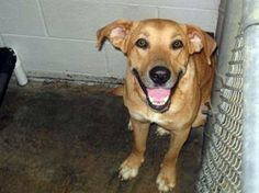 Tythe: Dog who saved puppy by donating blood is out of time at SC shelter ANIMAL ID: 23045393 BREED: Retriever SEX: male EST. AGE: 1 yr Est Weight: 58 lbs
