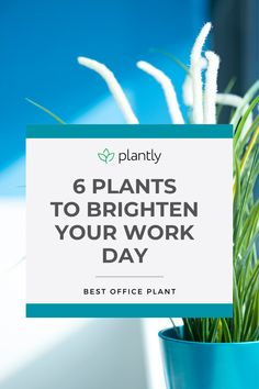 Whether you work in a huge office or are laboring in a cubicle a nice plant can go a long way. It gives a sense of enjoyment and peace, health, and prosperity. Why is it important in an office? You spend a large portion of your day working in your office, so why not make it a more enjoyable place by adding some of these best office plants?