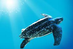 Bahamas Marine Habitats and Aquariums | Atlantis Paradise Island Resort