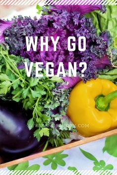 why go vegan?
