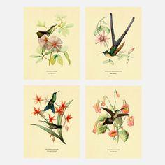 Hummingbird 8.5x11 Set Of 4 by L. Bevalet