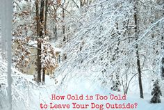 How Cold is Too Cold to Leave Your Dog Outside? Winter Safety Tips for Dogs Now the winter season is here, you might be asking yourself a very important question. How cold is too cold to leave your. Winter Tips, Winter Hacks, Dog Safety, Safety Tips, Do Dogs Get Colds, Short Haired Dogs, Wonder Pets, Outside Dogs, Winter Wonder